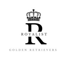 Royalist Goldens – kultaisetnoutajat